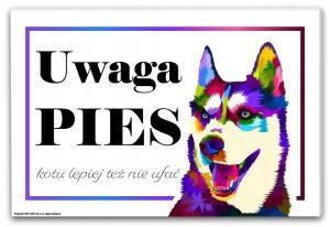 tabliczka uwaga pies husky